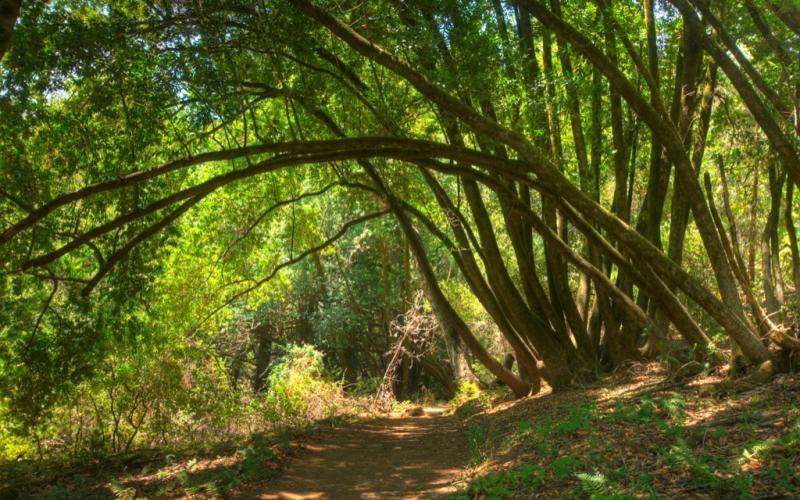 Huddart Park Hike