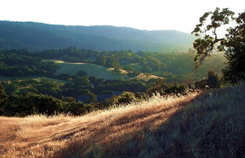 Teague Hill Open Space Preserve Habitat Restoration