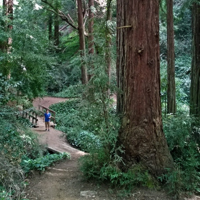 Dimond Canyon & Joaquin Miller Park Hike