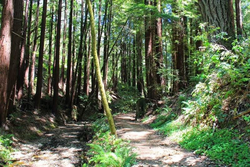 Crystal Spring & Dean Trail