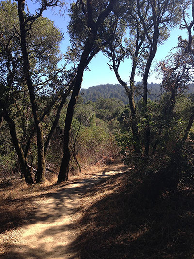 thornewood_open_space_preserve_mountains_and_trail
