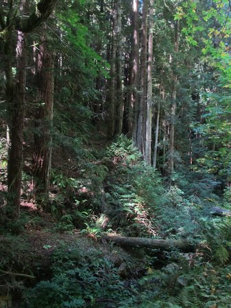 Purisima Creek Redwoods Preserve Hike