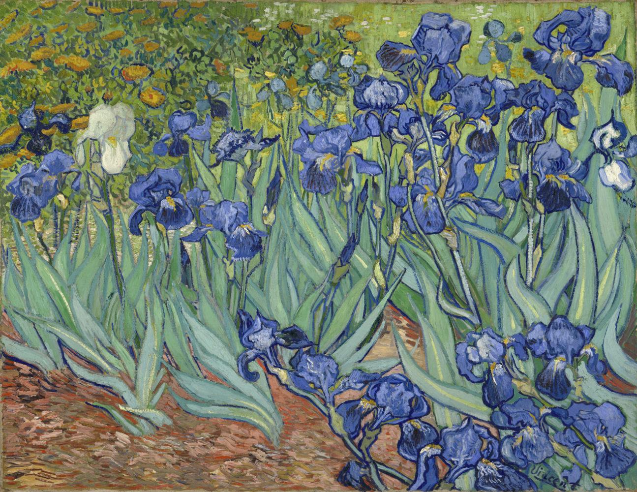 getty-irises-1